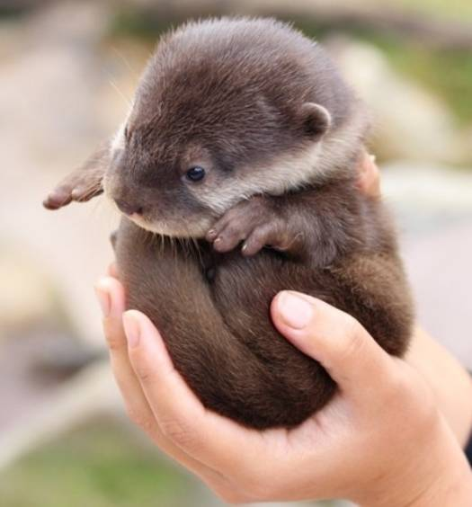 This is going to a dark place. Let's take a baby otter break.